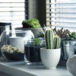 Las plantas mejoran la habitabilidad y humanizan tu casa!